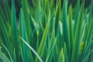 Symbolique du vert
