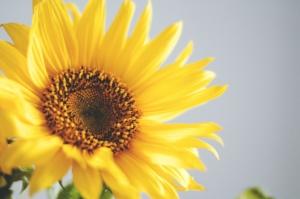 Symbolique du jaune